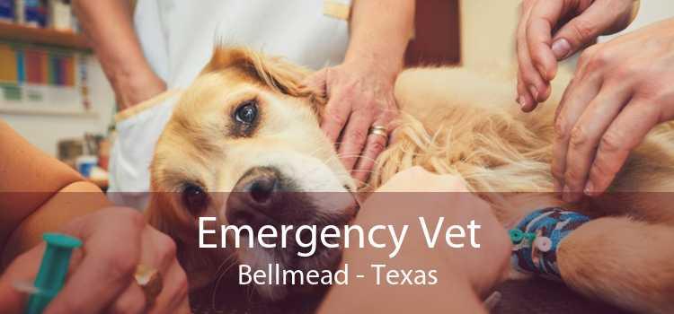 Emergency Vet Bellmead - Texas