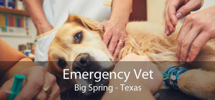 Emergency Vet Big Spring - Texas