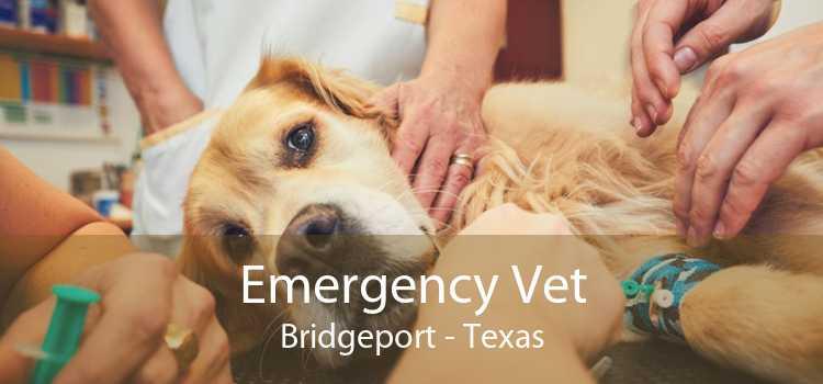 Emergency Vet Bridgeport - Texas