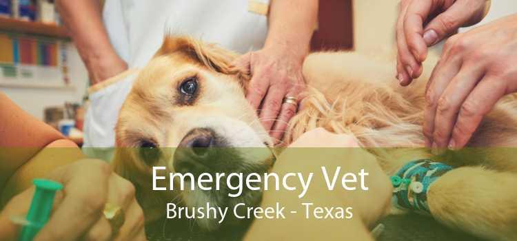 Emergency Vet Brushy Creek - Texas