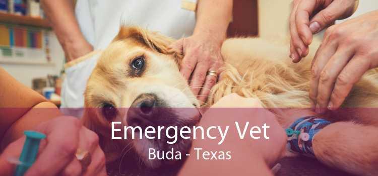 Emergency Vet Buda - Texas