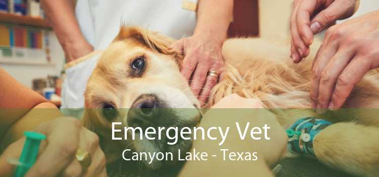 Emergency Vet Canyon Lake - Texas