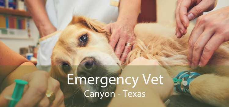 Emergency Vet Canyon - Texas