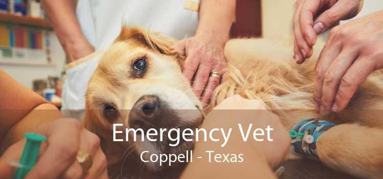 Emergency Vet Coppell - Texas