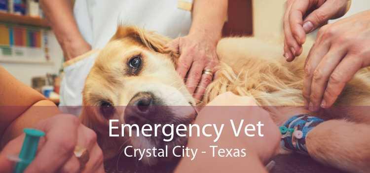 Emergency Vet Crystal City - Texas
