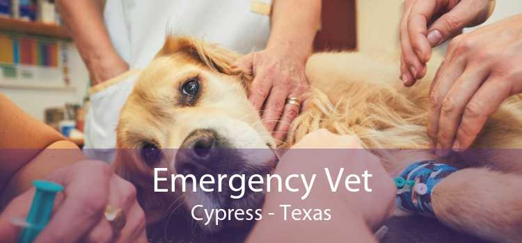 Emergency Vet Cypress - Texas