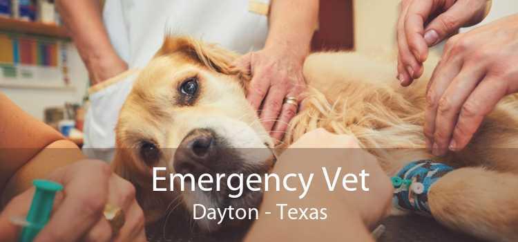 Emergency Vet Dayton - Texas