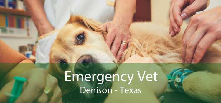 Emergency Vet Denison - Texas