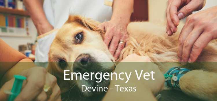 Emergency Vet Devine - Texas