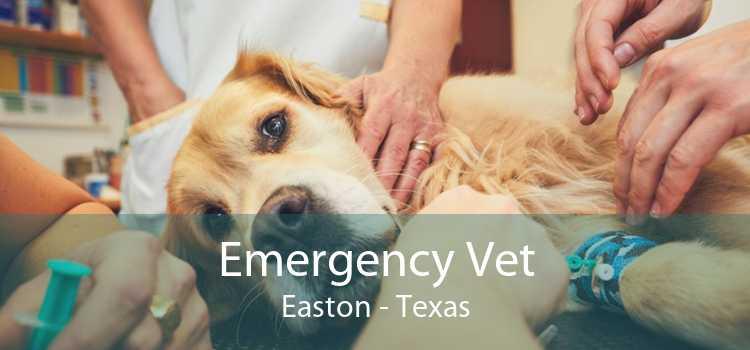 Emergency Vet Easton - Texas