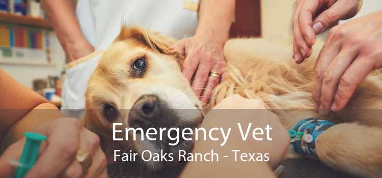 Emergency Vet Fair Oaks Ranch - Texas