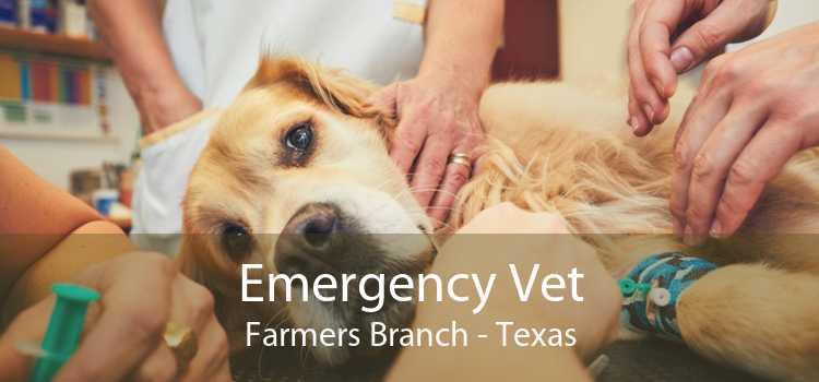 Emergency Vet Farmers Branch - Texas