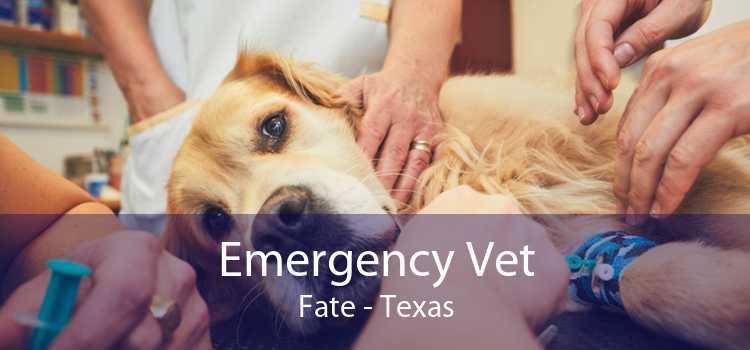 Emergency Vet Fate - Texas