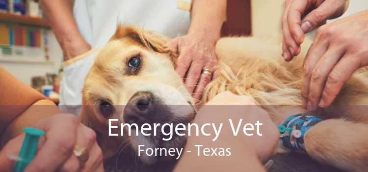 Emergency Vet Forney - Texas