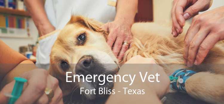 Emergency Vet Fort Bliss - Texas