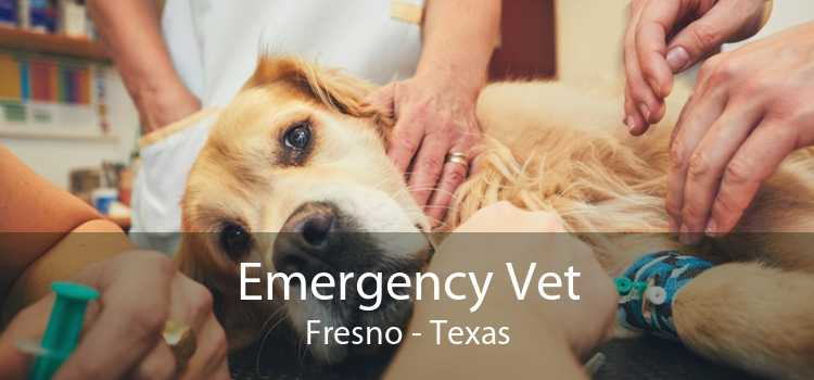 Emergency Vet Fresno - Texas