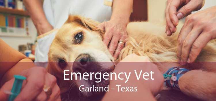 Emergency Vet Garland - Texas