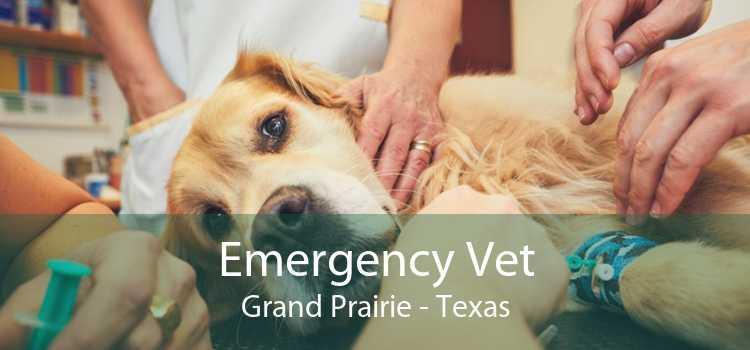 Emergency Vet Grand Prairie - Texas