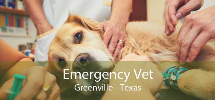 Emergency Vet Greenville - Texas