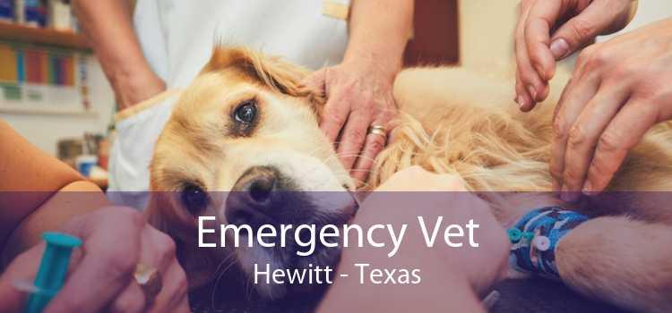 Emergency Vet Hewitt - Texas