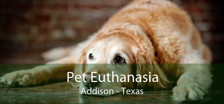 Pet Euthanasia Addison - Texas
