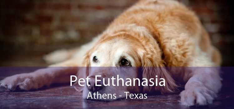 Pet Euthanasia Athens - Texas