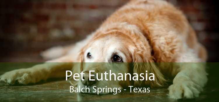 Pet Euthanasia Balch Springs - Texas