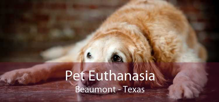 Pet Euthanasia Beaumont - Texas
