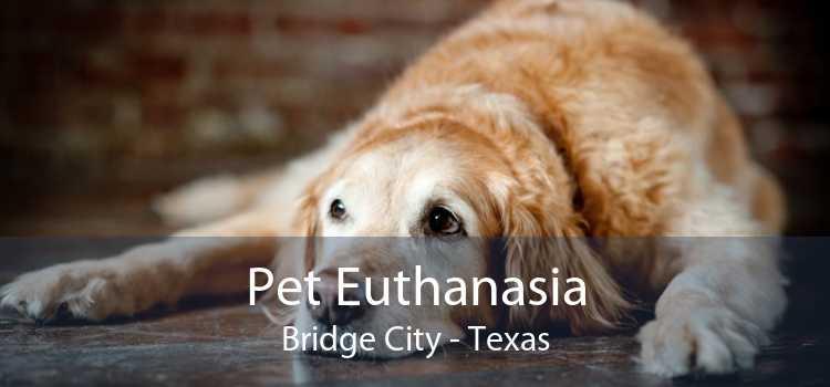 Pet Euthanasia Bridge City - Texas