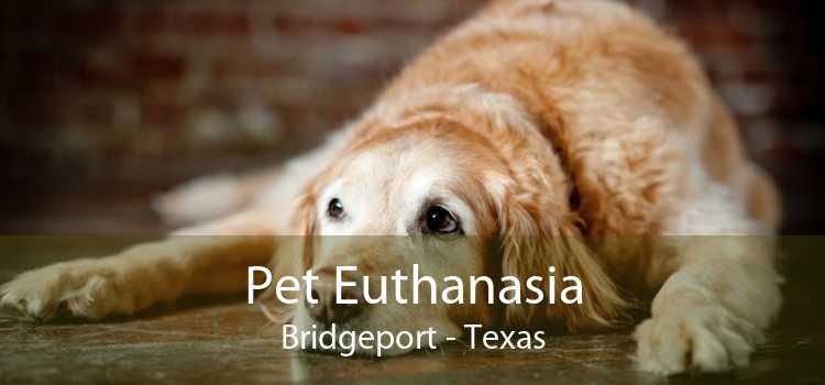 Pet Euthanasia Bridgeport - Texas