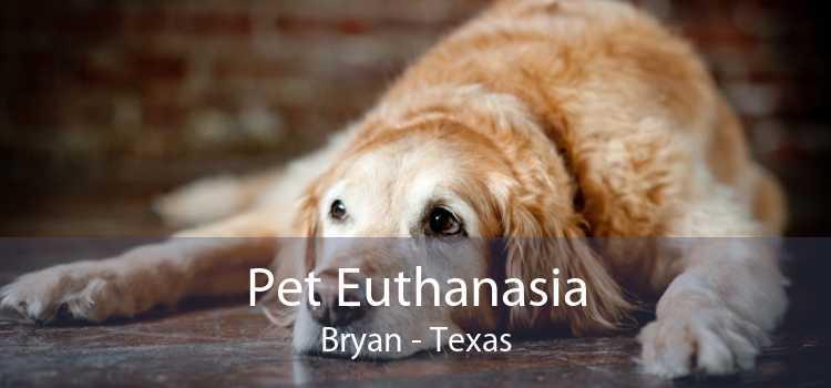 Pet Euthanasia Bryan - Texas