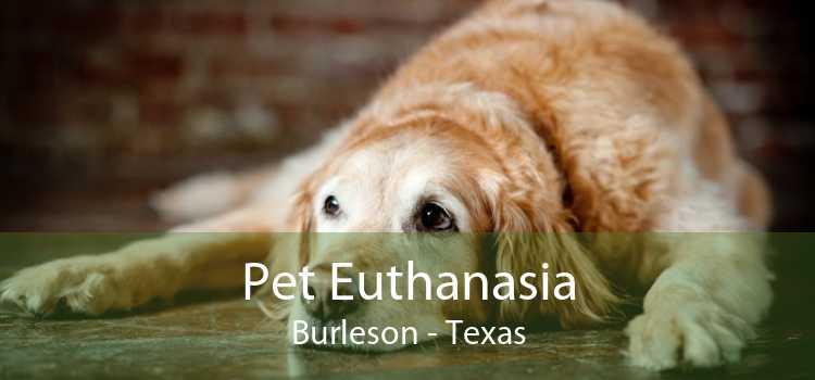 Pet Euthanasia Burleson - Texas
