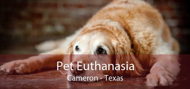 Pet Euthanasia Cameron - Texas