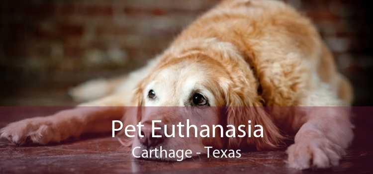 Pet Euthanasia Carthage - Texas