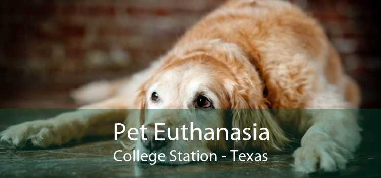 Pet Euthanasia College Station - Texas
