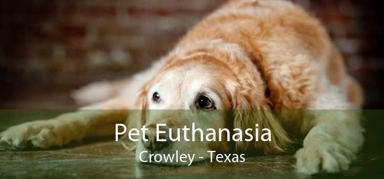 Pet Euthanasia Crowley - Texas