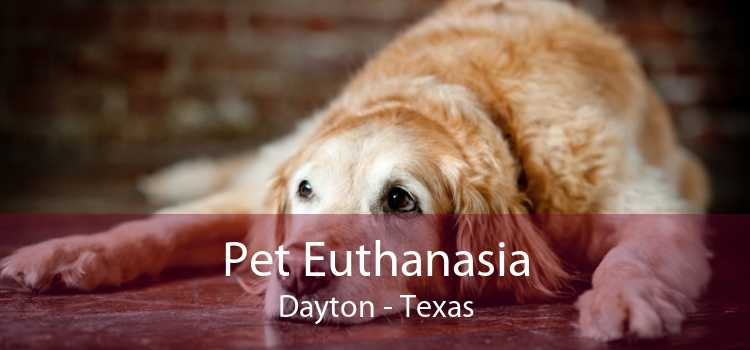 Pet Euthanasia Dayton - Texas
