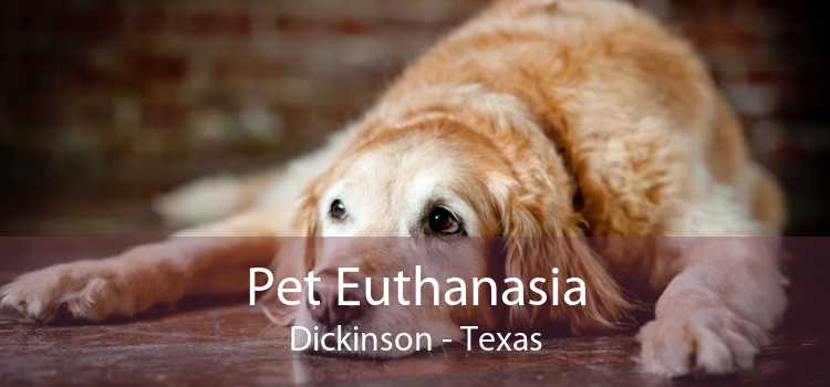 Pet Euthanasia Dickinson - Texas