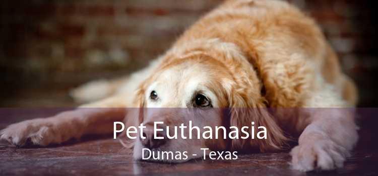 Pet Euthanasia Dumas - Texas