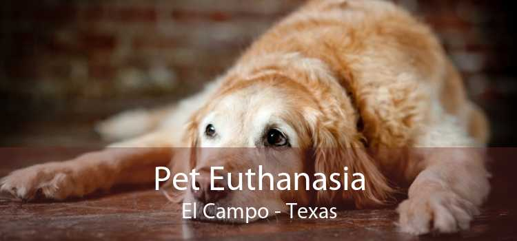 Pet Euthanasia El Campo - Texas