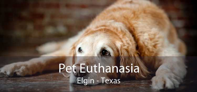 Pet Euthanasia Elgin - Texas