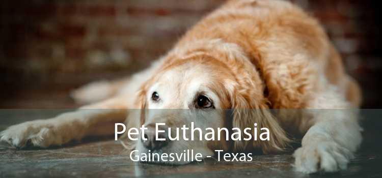 Pet Euthanasia Gainesville - Texas