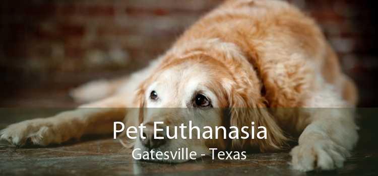Pet Euthanasia Gatesville - Texas