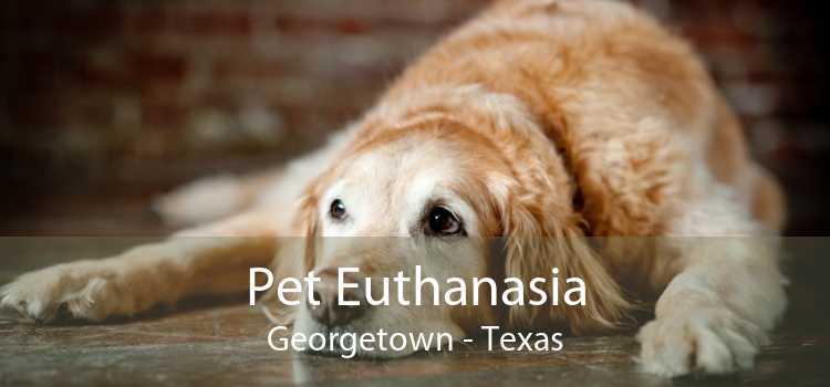 Pet Euthanasia Georgetown - Texas