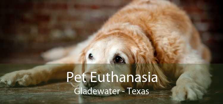 Pet Euthanasia Gladewater - Texas