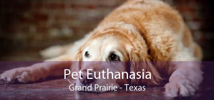 Pet Euthanasia Grand Prairie - Texas
