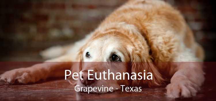 Pet Euthanasia Grapevine - Texas