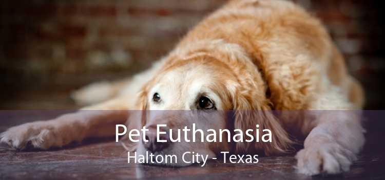Pet Euthanasia Haltom City - Texas
