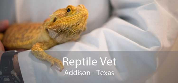 Reptile Vet Addison - Texas
