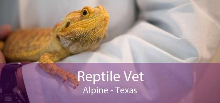 Reptile Vet Alpine - Texas